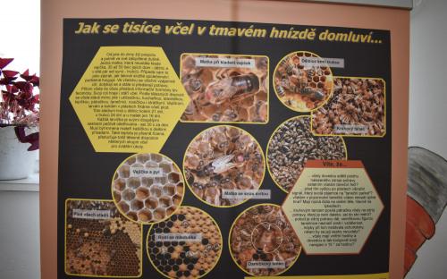 Jak se včely domluví